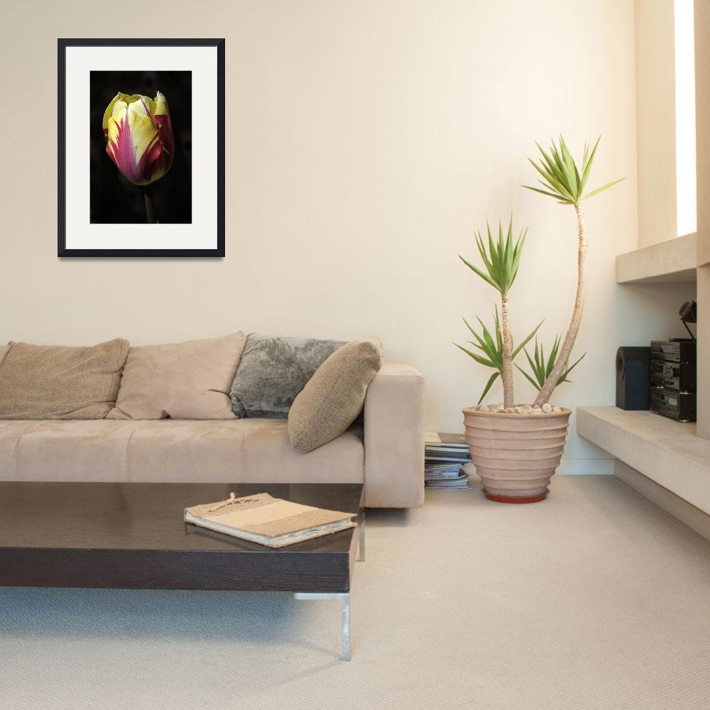 """Vintage Rembrandt Tulip&quot  (2010) by LightHeart"