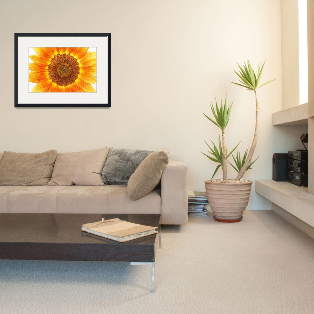 """""""SUNFLOWER 2&quot  (2011) by peppe"""
