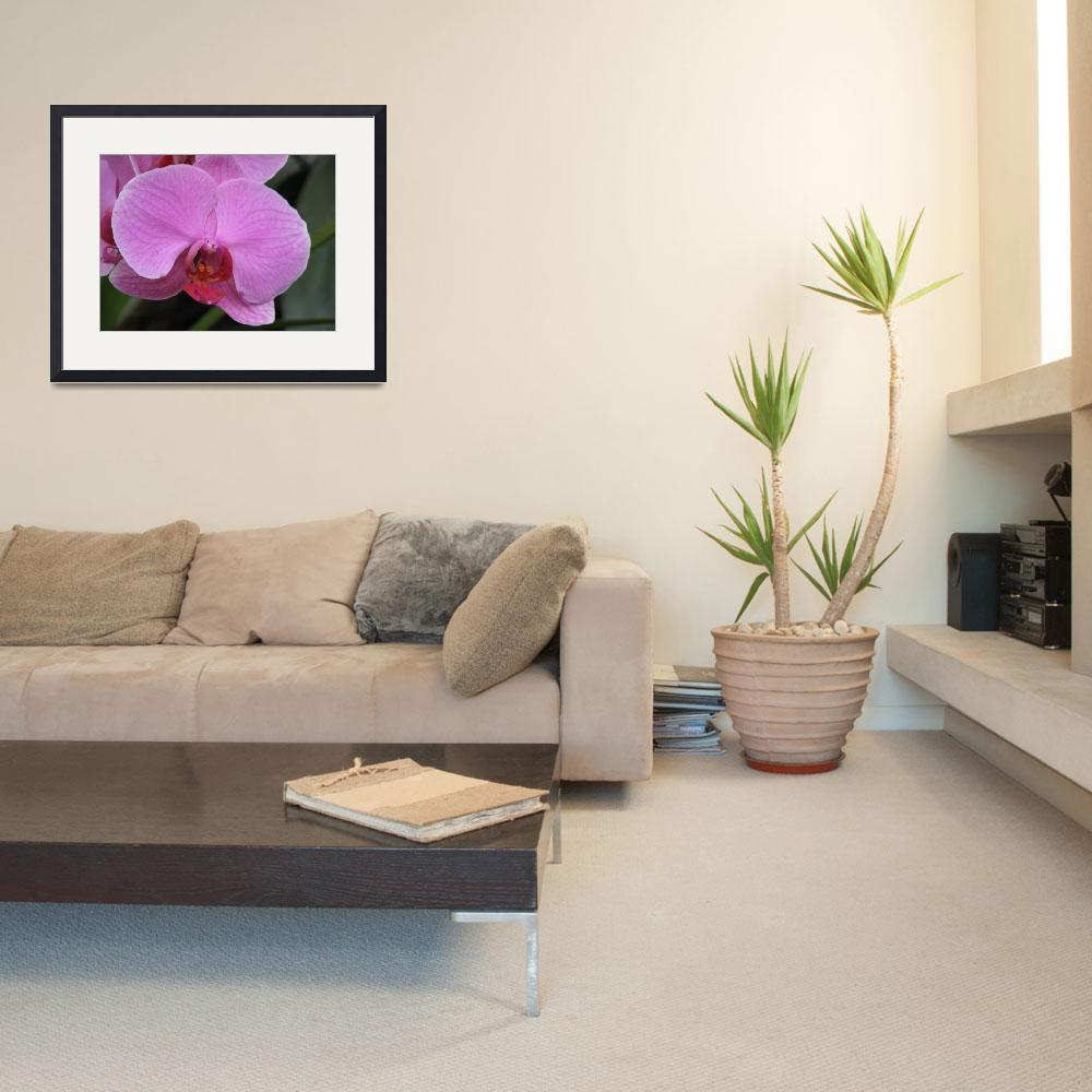 """""""Pink flower of Thailand""""  (2008) by photorose"""