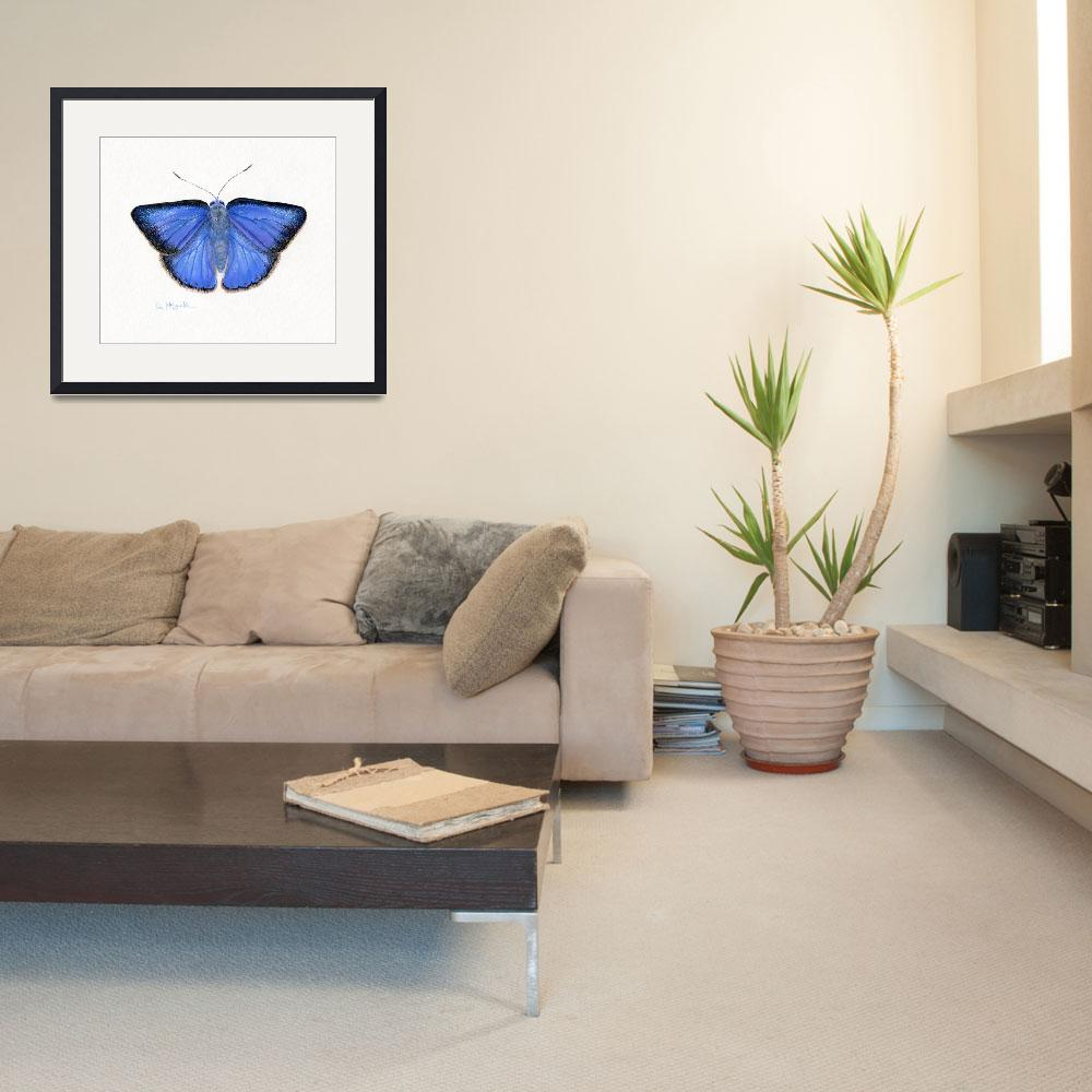 """Arizona hairstreak butterfly&quot  (2008) by LisaMclaughlin"