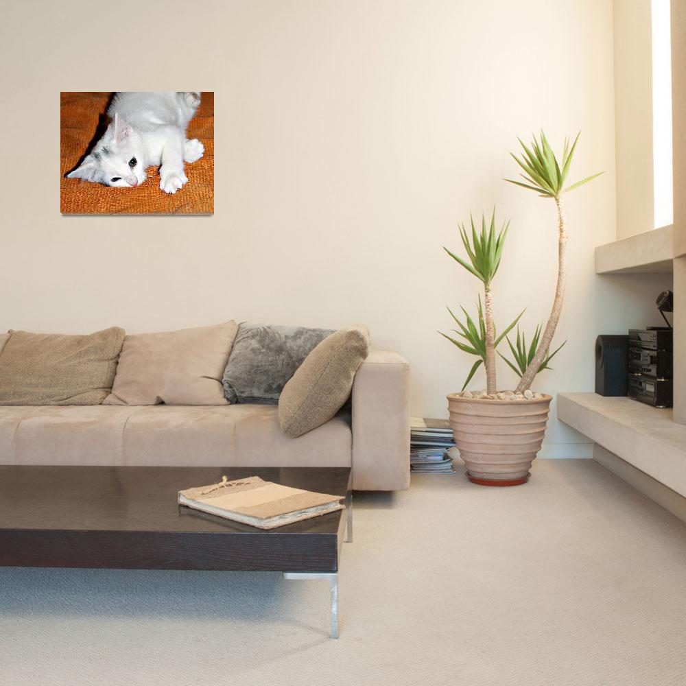 """Playful White Kitten""  (2013) by VikingVisual"