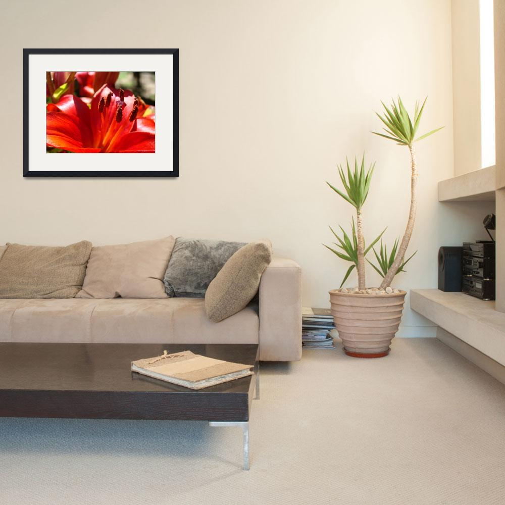 """""""Red Lily Flower art print Lilies Floral Baslee Tro&quot  (2010) by BasleeTroutman"""