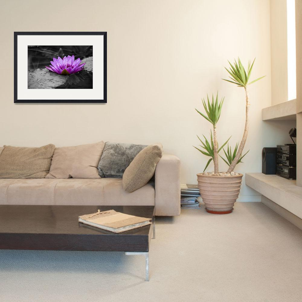 """Purple Water Lily 002 Black and White Background&quot  (2013) by ValeriesGallery"