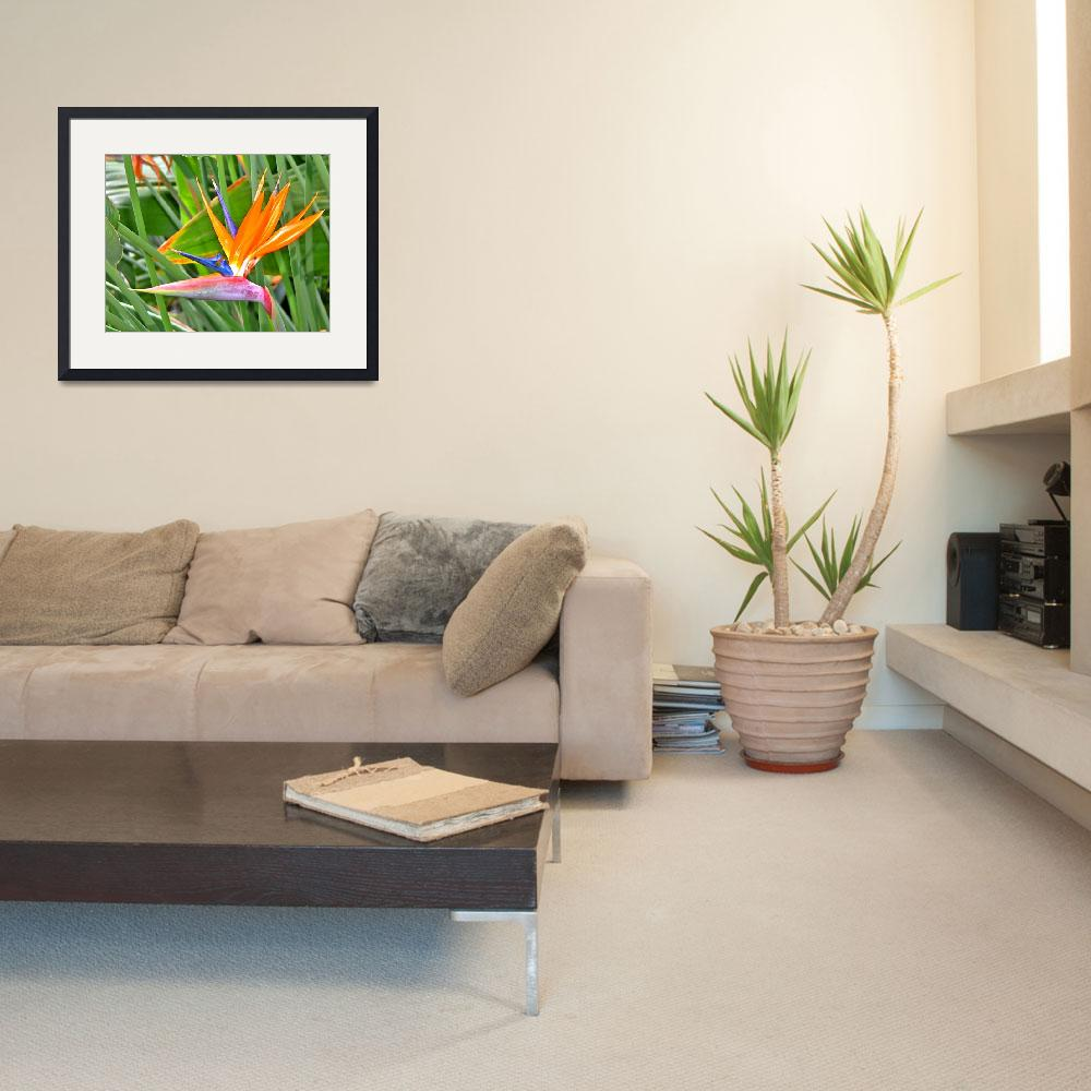 """""""Bird of Paradise&quot  (2004) by GalleryPhotoCanvas"""