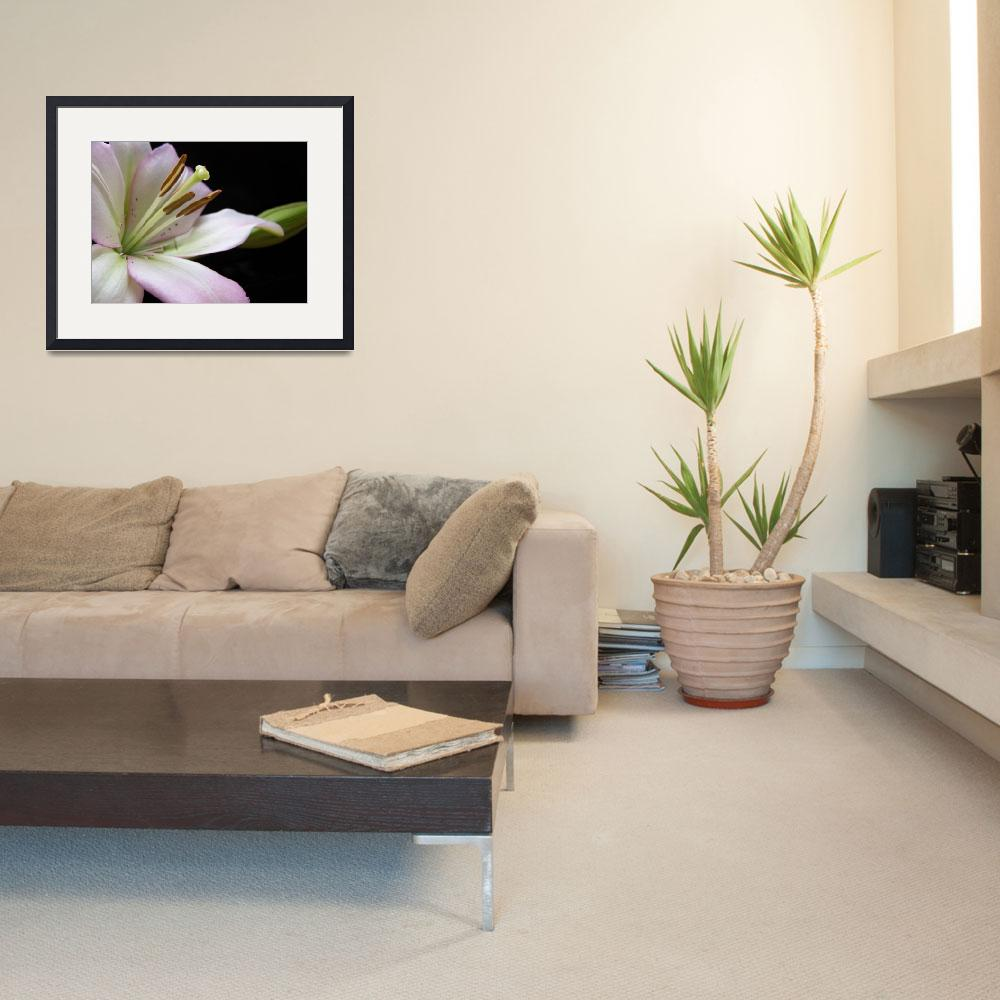 """""""Peaceful Lily&quot  (2009) by MzEmCab"""
