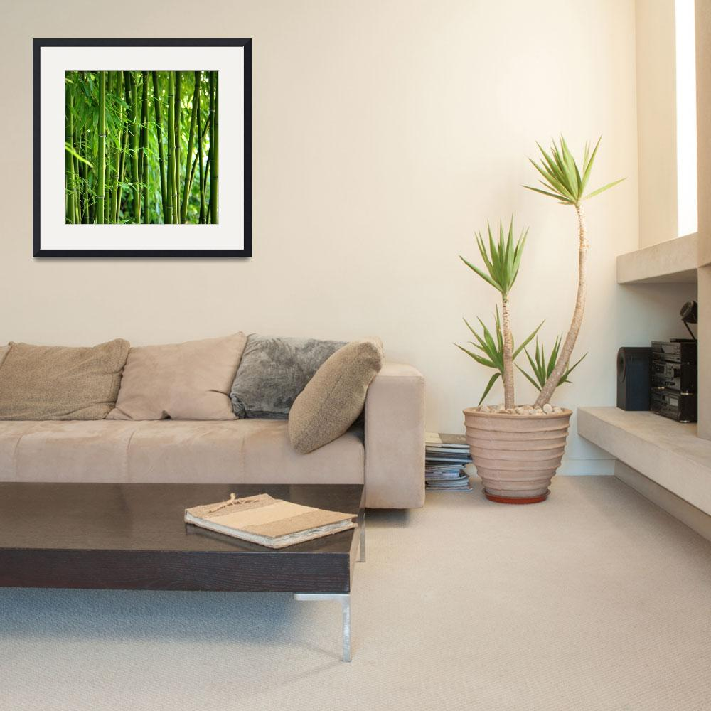 """""""Bamboo&quot  (2010) by gabii40"""