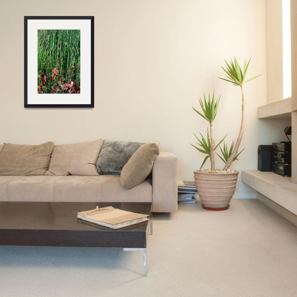 """""""Fall Grasses""""  (2011) by Clearycreativephoto"""
