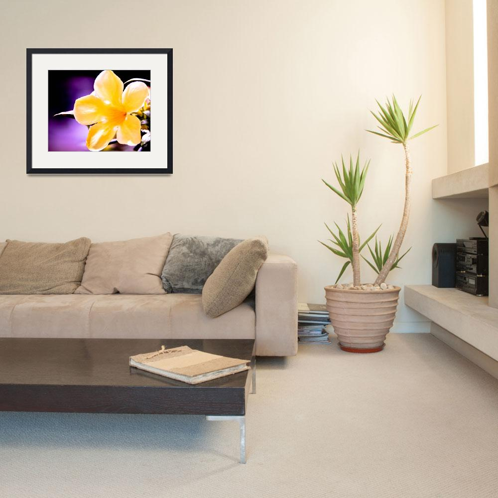 """""""Yellow Flower""""  (2012) by VCSPhotography"""