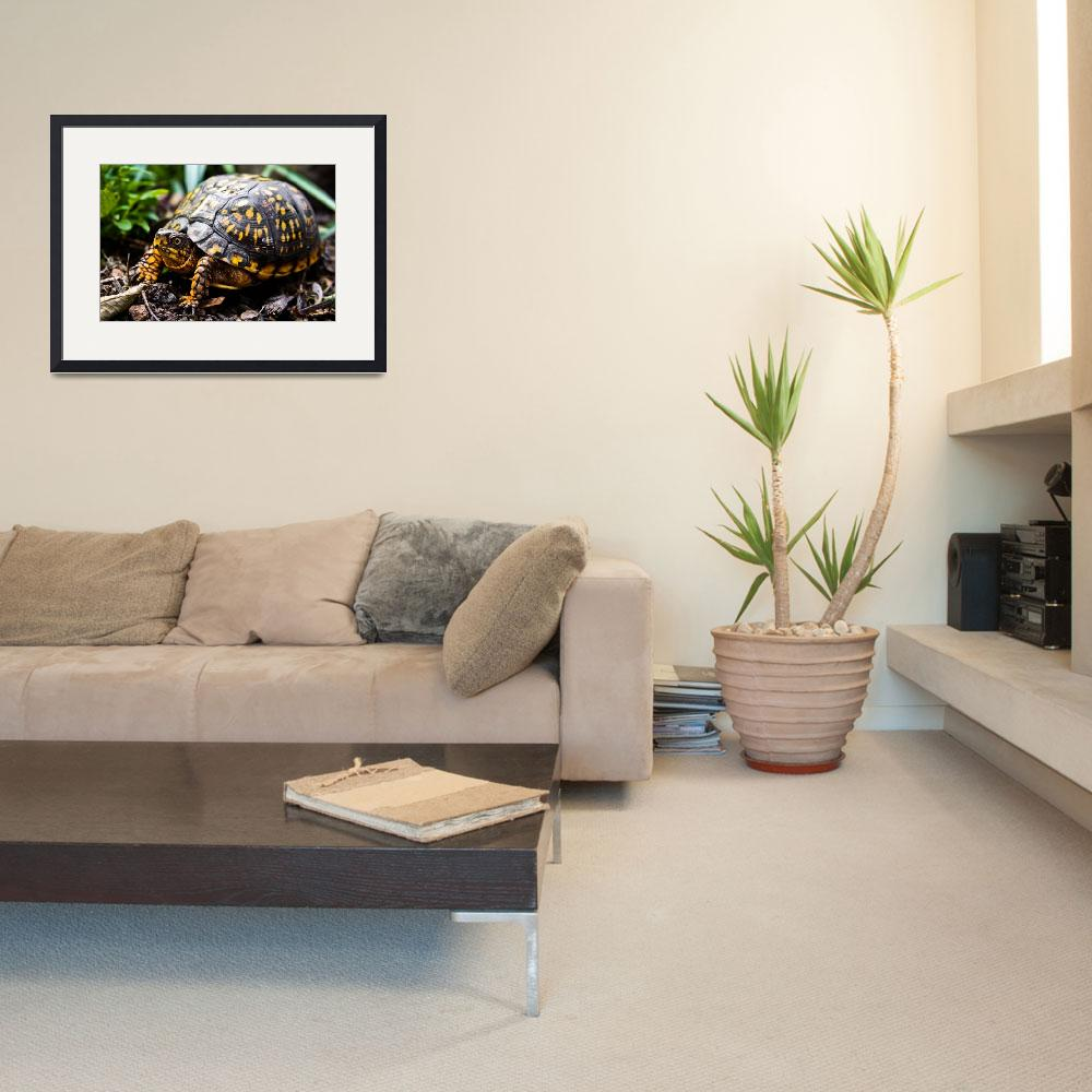 """""""ROAMING BOX TURTLE&quot  (2010) by photographybyryankelly"""