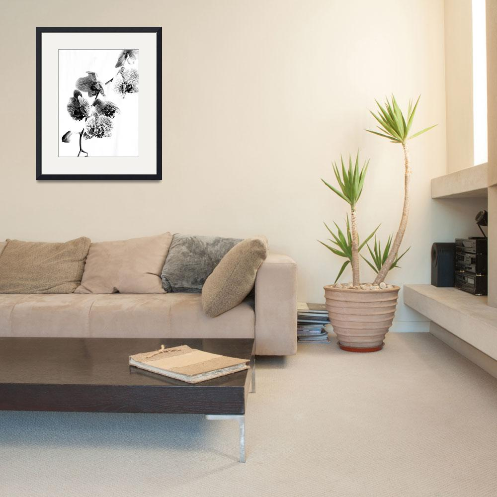 """Spotted Phalaenopsis or Moth Orchid in Black and W""  (2009) by walbyent"