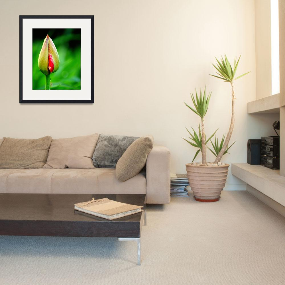 """Tulip Bud&quot  (2014) by joanhan"