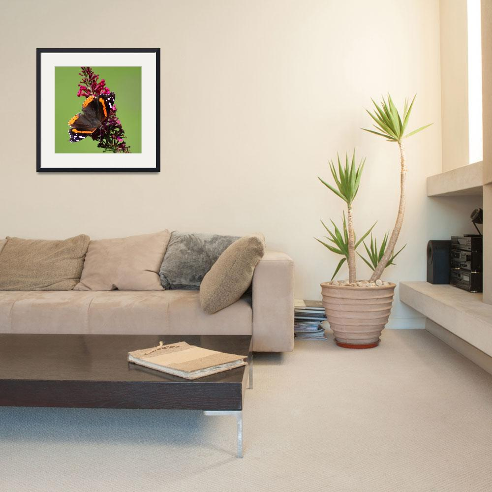 """Red Admiral Butterfly Square 2015""  (2015) by KsWorldArt"