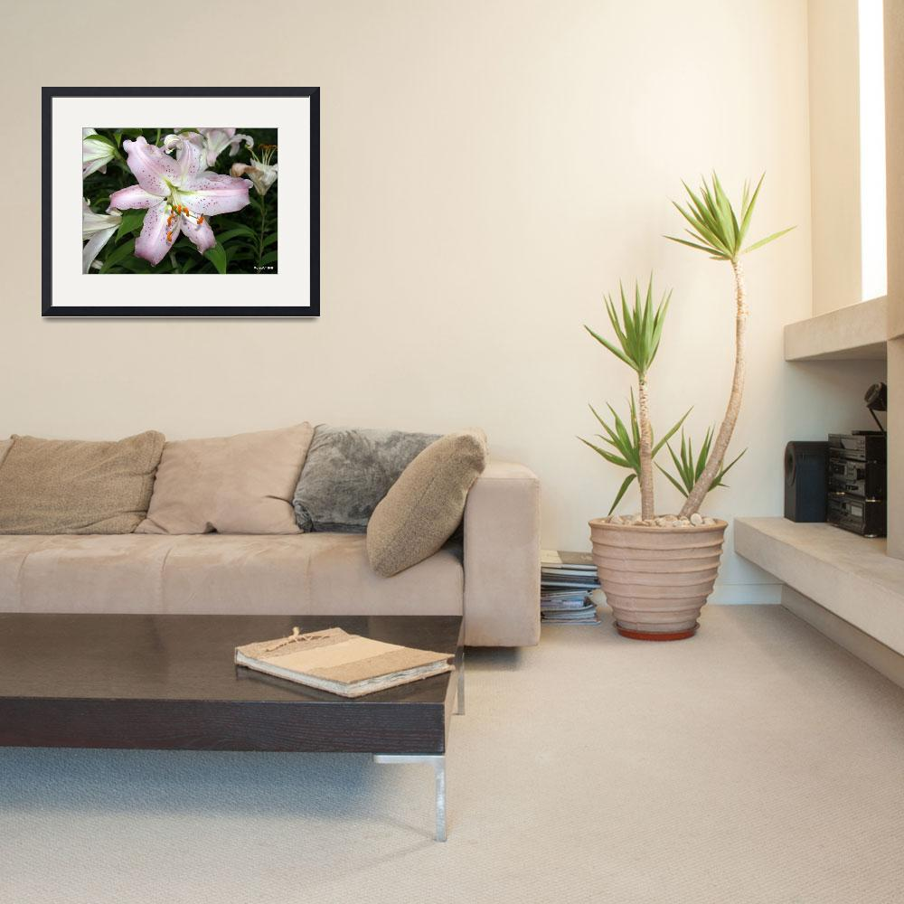 """Pink lily&quot  (2008) by perryw1958"