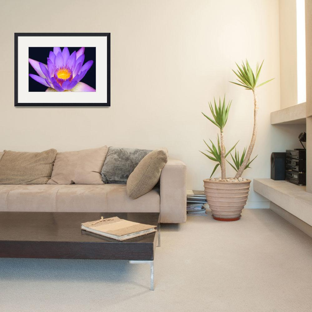 """""""Lavender Water Lily 2&quot  (2009) by FordLou"""