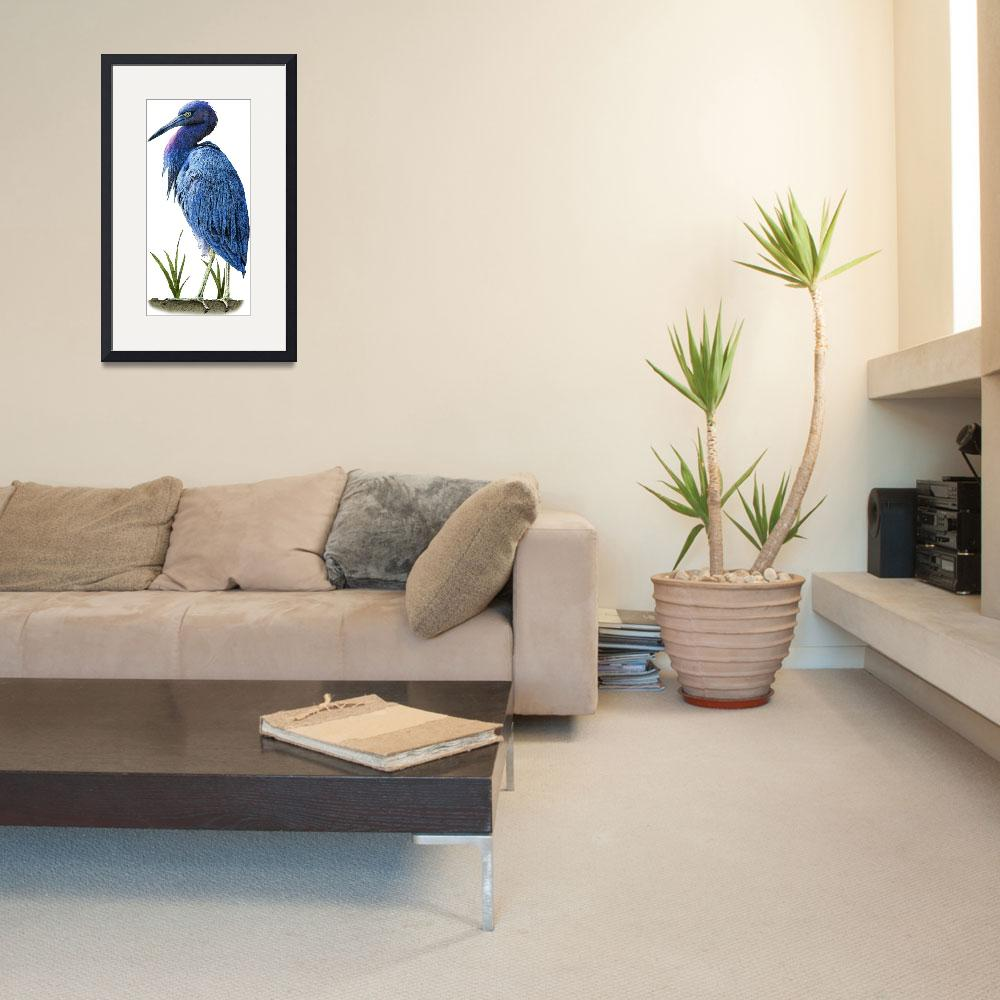 """""""Little Blue Heron&quot  by inkart"""