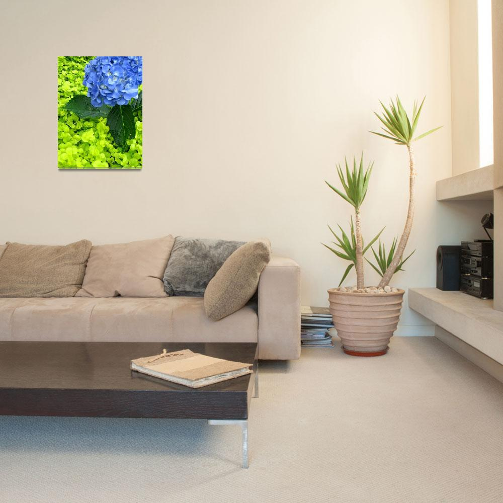 """""""Bouncin Hydrangea in the room&quot  (2008) by teishash"""
