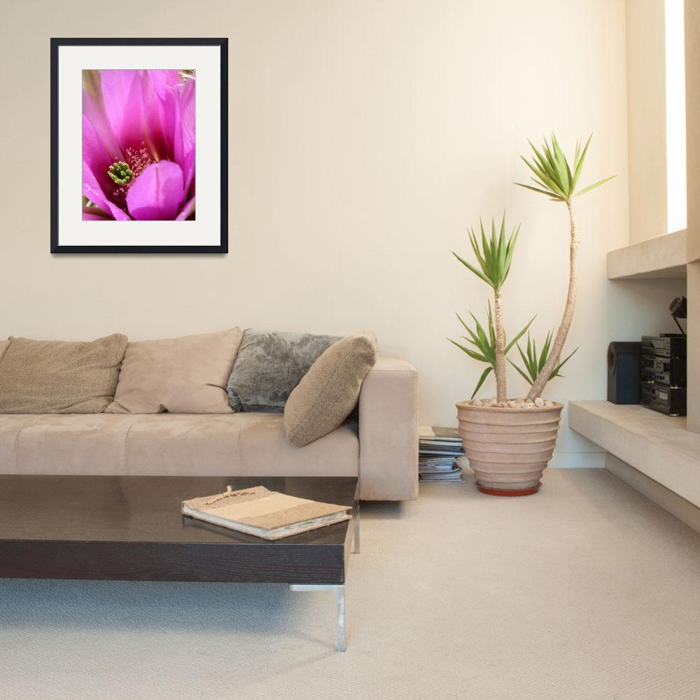 """""""Glimpse of Pink Cactus""""  by MysticLightPhotography"""