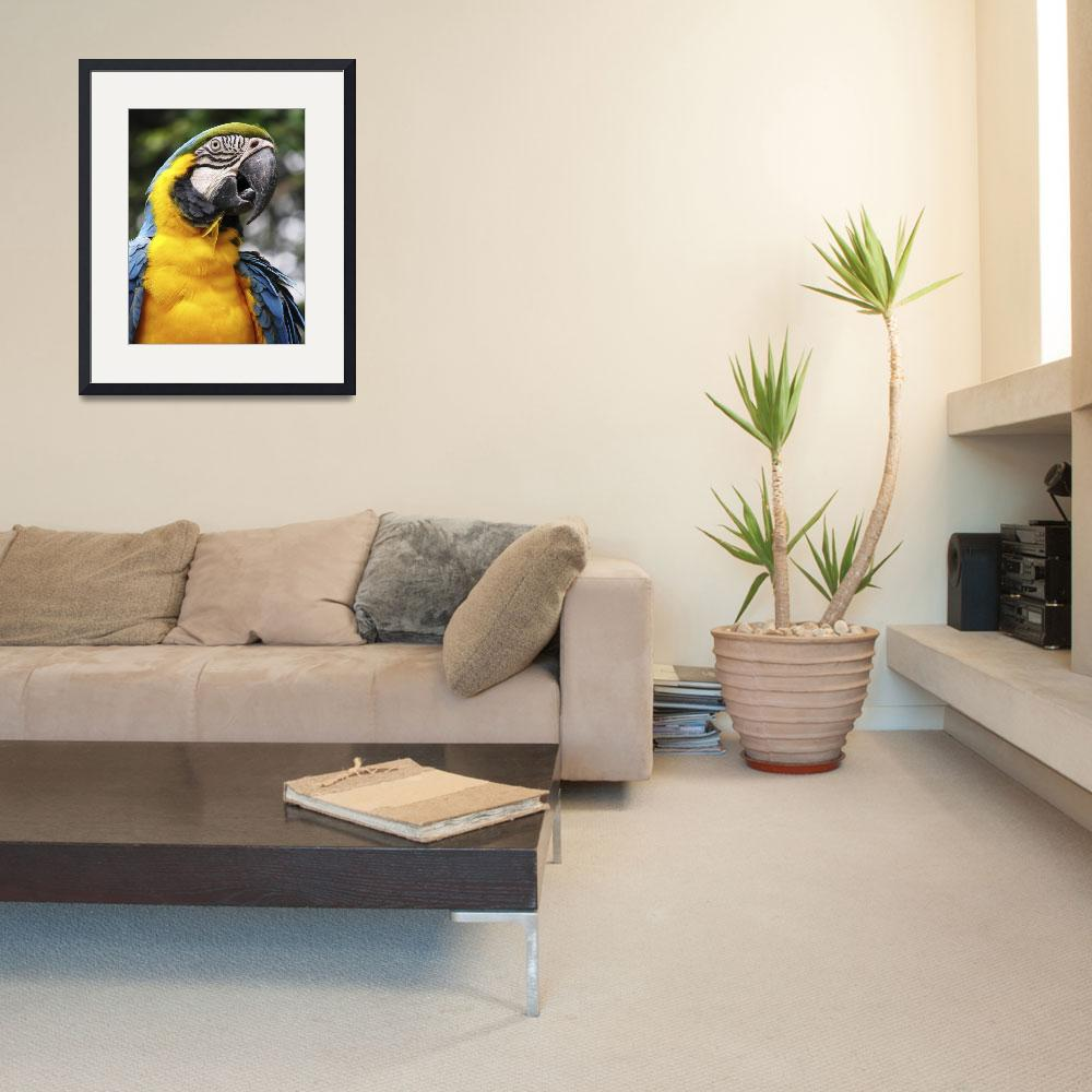 """""""Blue and Yellow Parrot""""  (2006) by bhouse"""