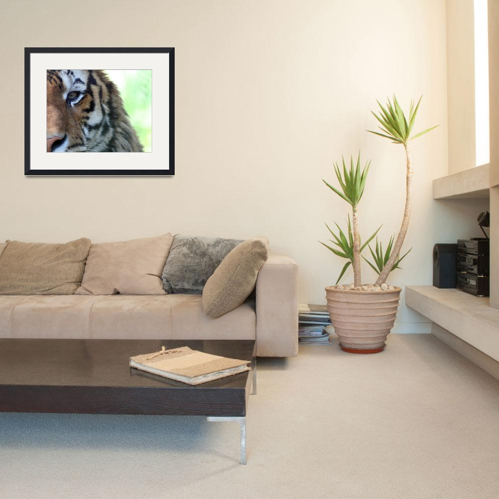 """""""Tiger&quot  (2006) by nswanson"""