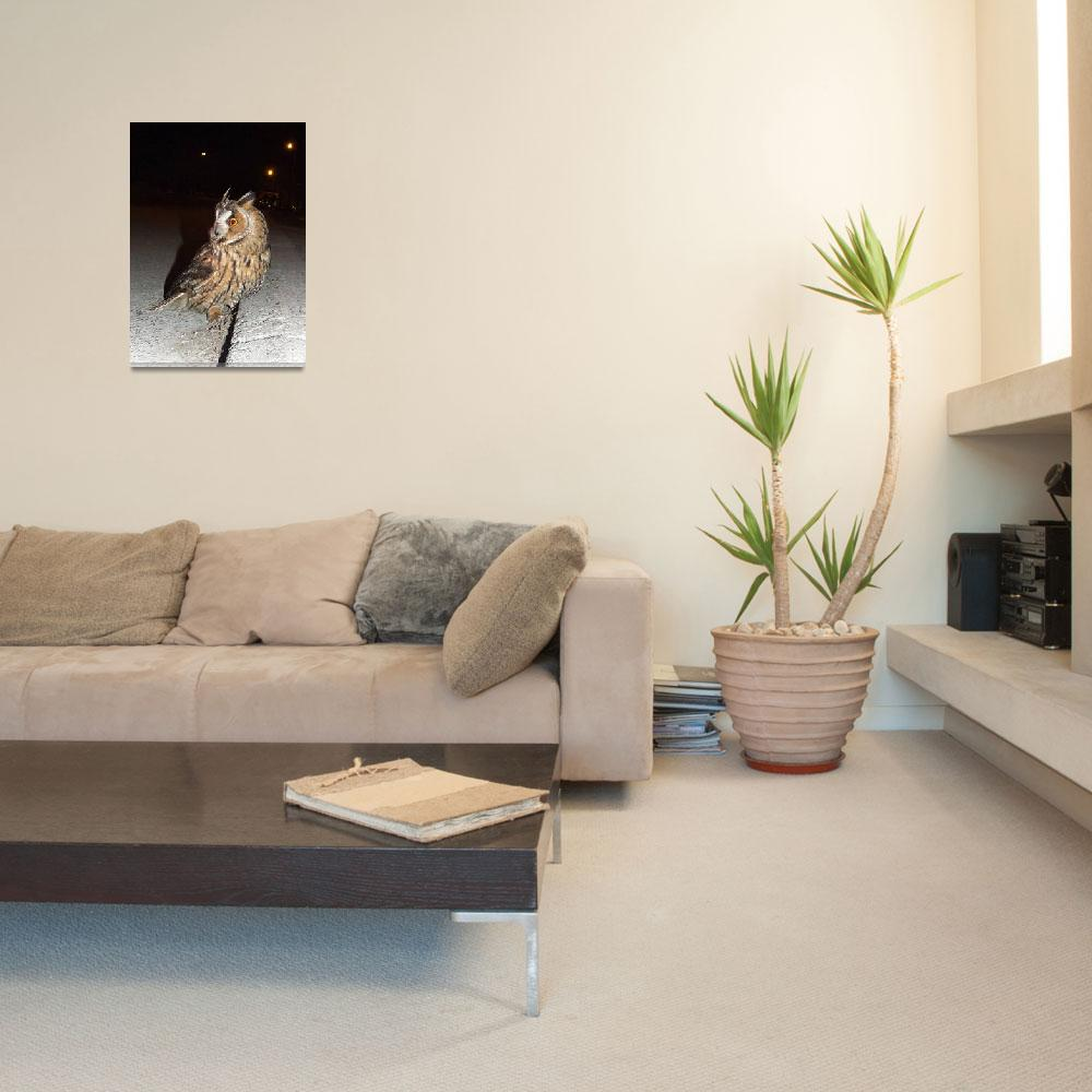 """Long-eared Owl (Asio otus) DSCF1767""  (2013) by Banstolac"