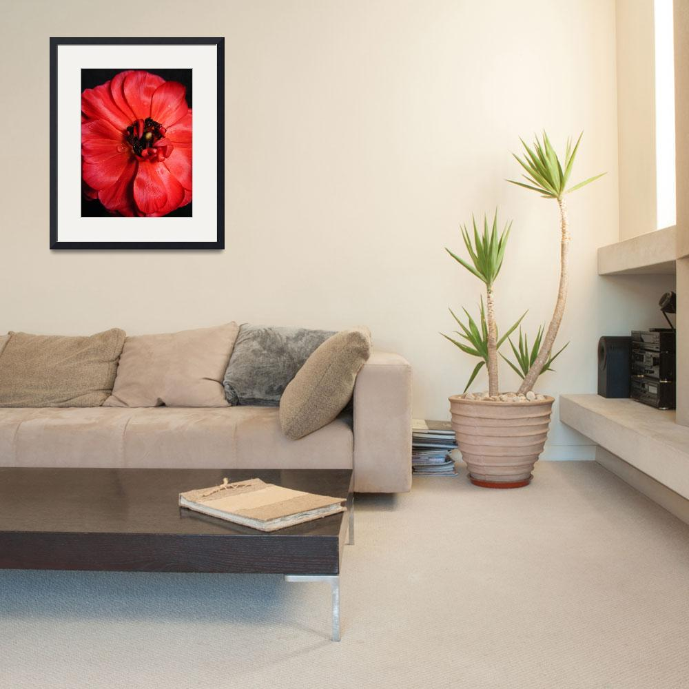 """""""red flower&quot  (2009) by nyc-naturephoto"""