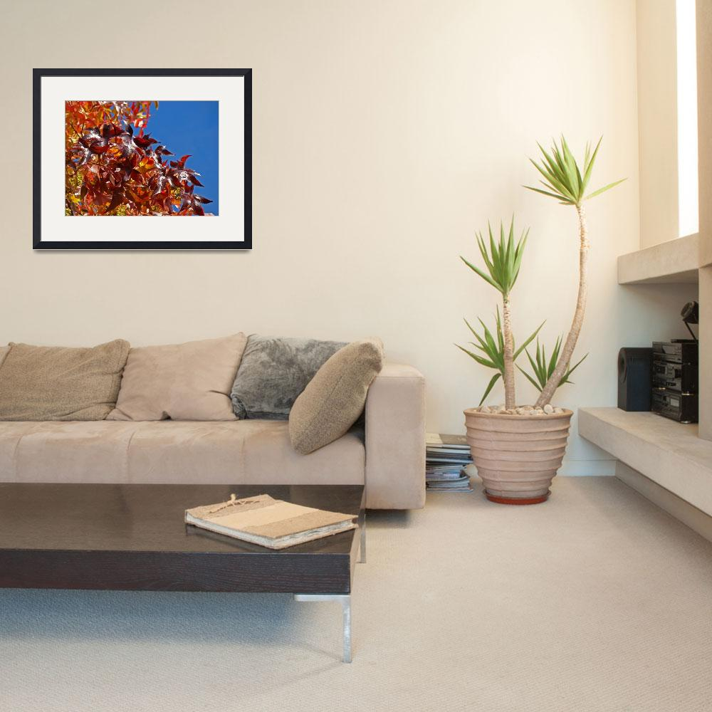 """""""Red Leaves Autumn Tree art prints Blue Sky Nature&quot  (2011) by BasleeTroutman"""