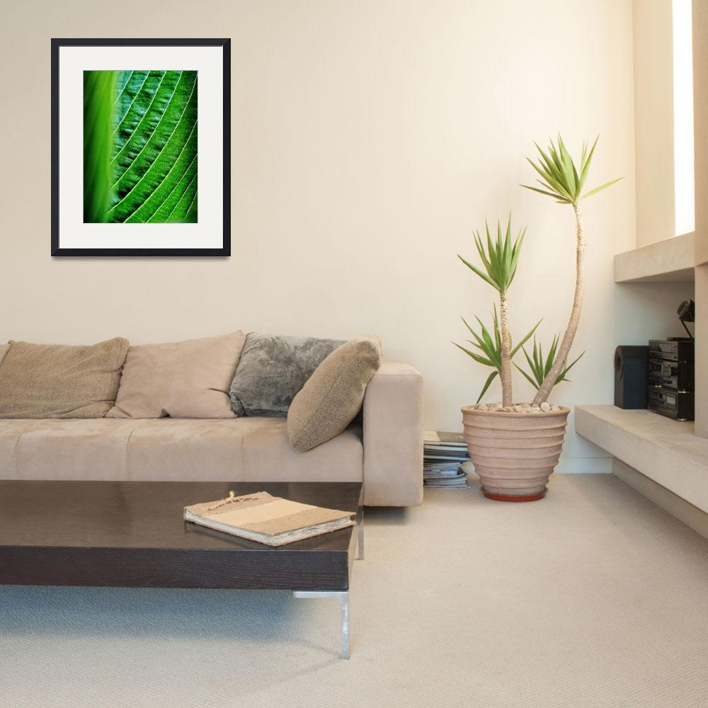 """""""Hosta Abstract&quot  (2011) by bavosiphotoart"""