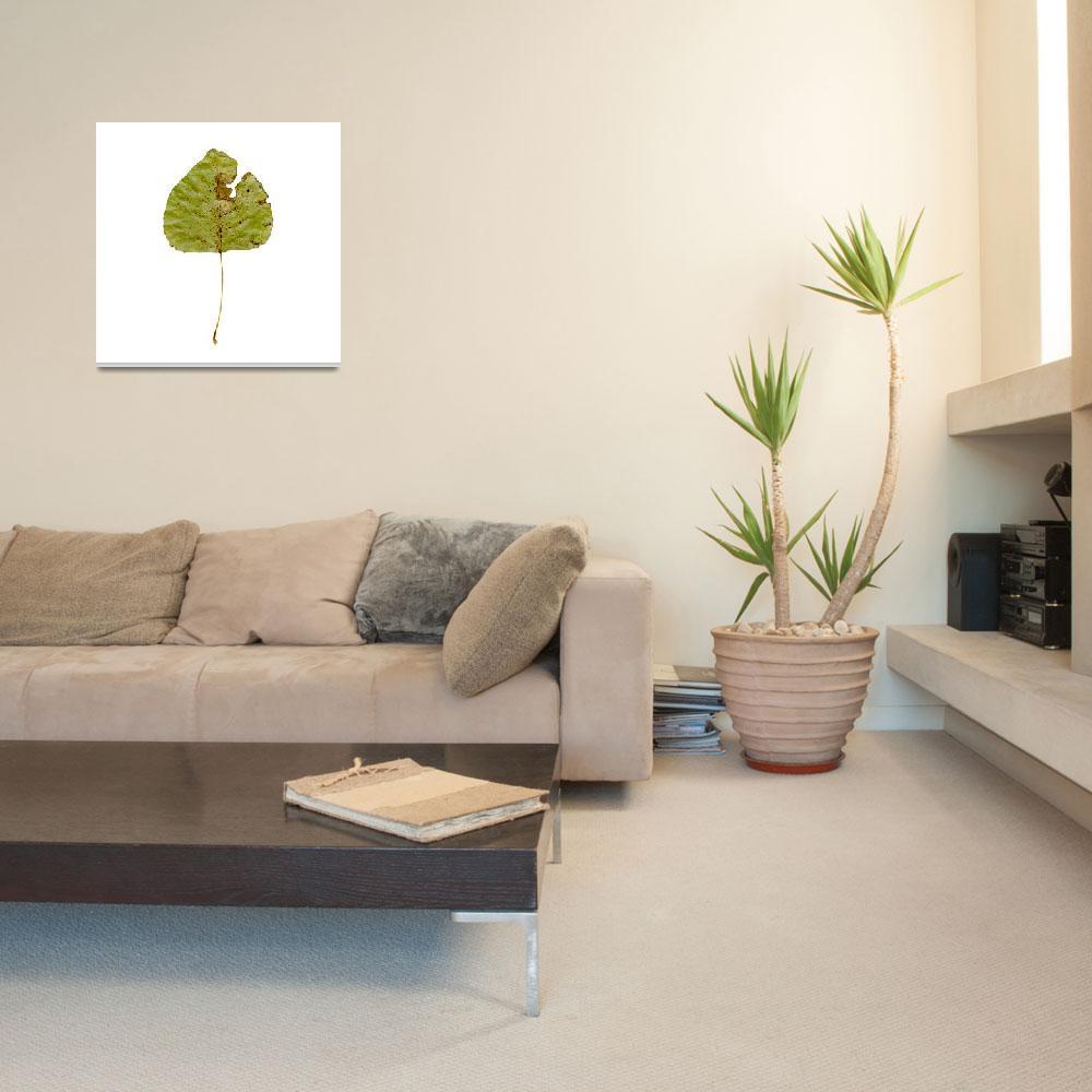 """leaf""  (2018) by jnanian"
