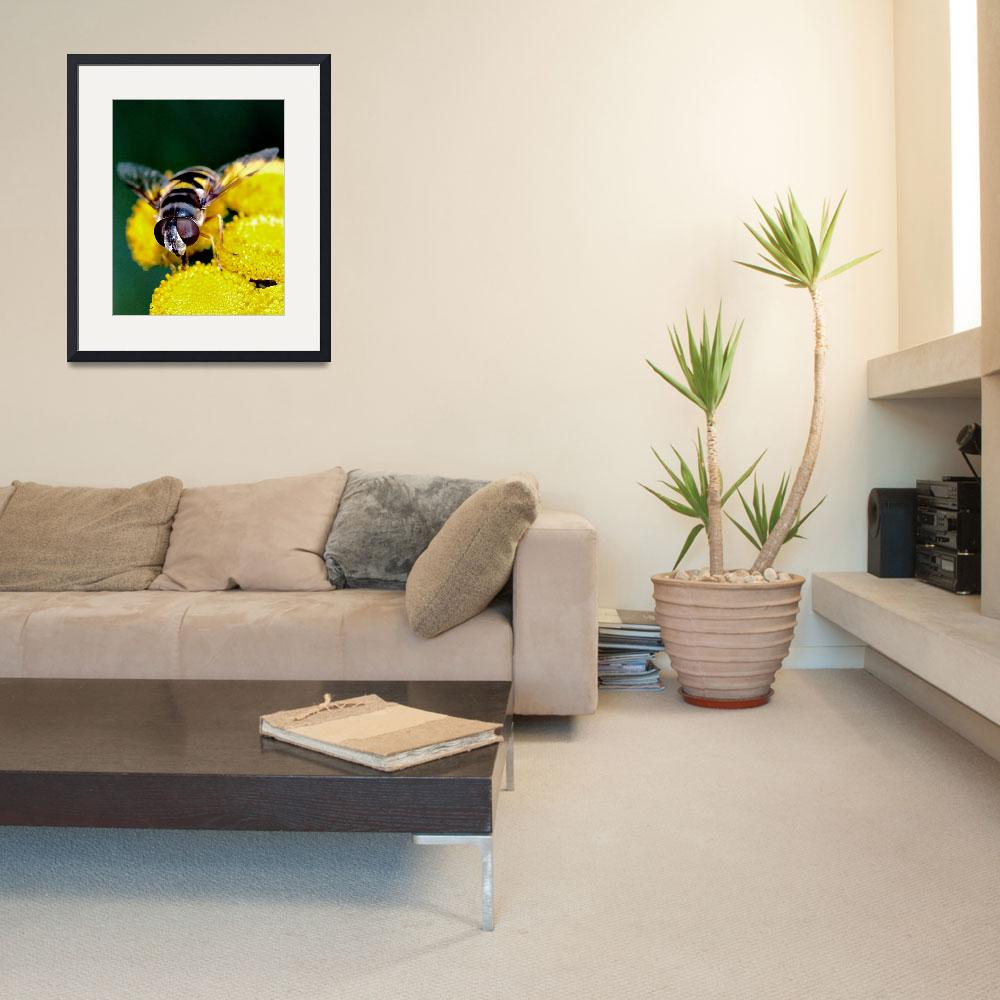 """""""Hover Fly ll&quot  (2009) by bavosiphotoart"""