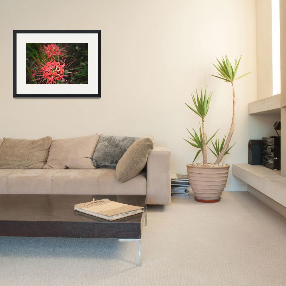 """spider lilies red flowers photo art print&quot  (2010) by derekmccrea"
