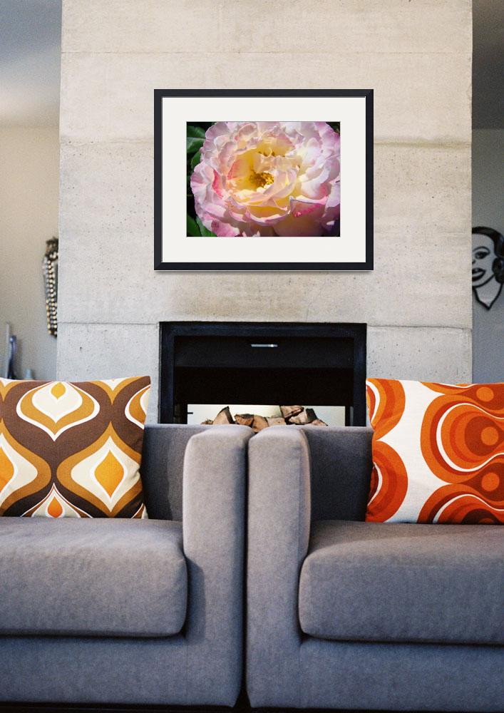 """""""Beautiful Big Pink Yellow Rose Floral art prints&quot  (2010) by BasleeTroutman"""