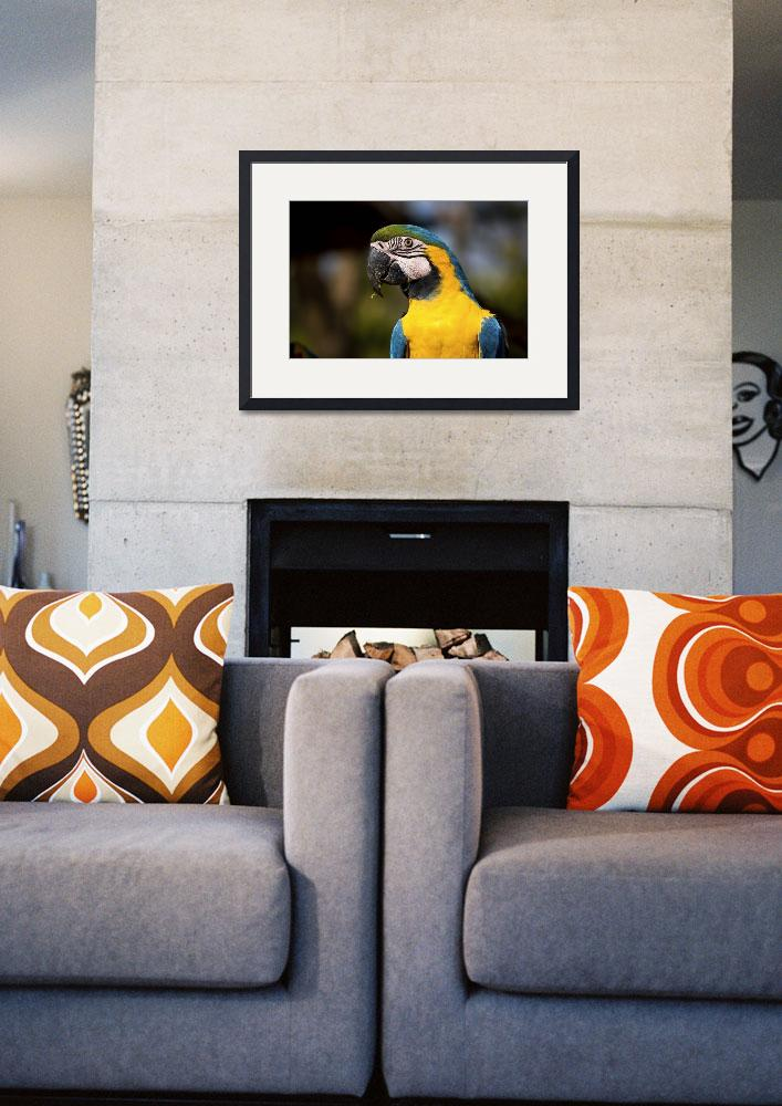 """""""Blue & Gold Macaw portrait&quot  (2009) by photocell"""