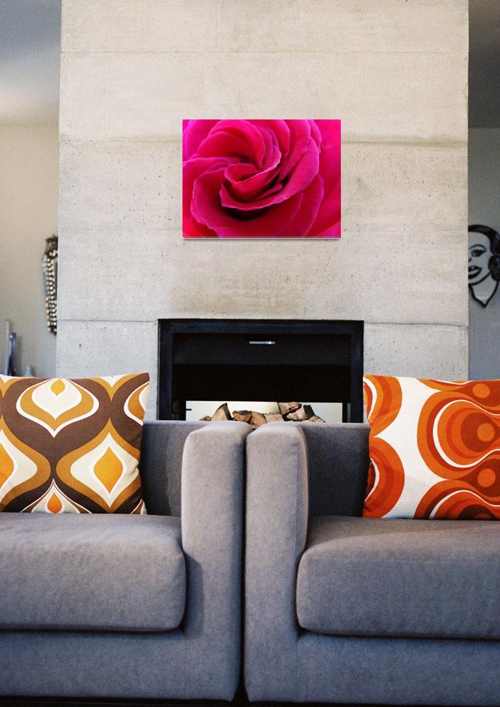 """""""Rose Spiral macro art print Pink Rose Flower""""  (2010) by BasleeTroutman"""