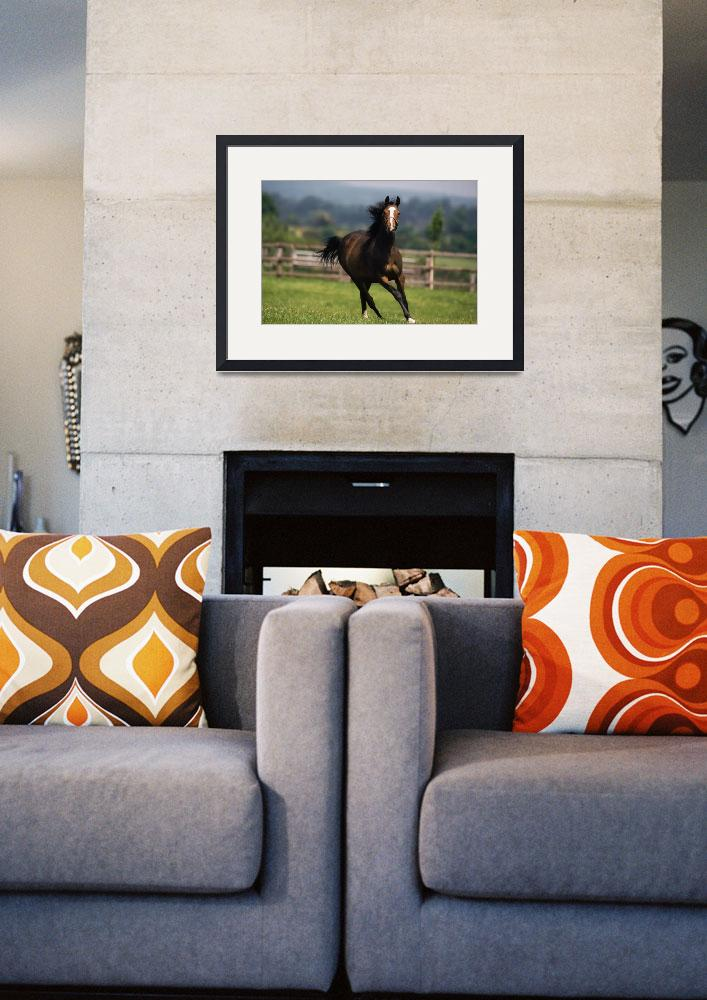"""""""Thoroughbred Horses, Yearlings&quot  by DesignPics"""