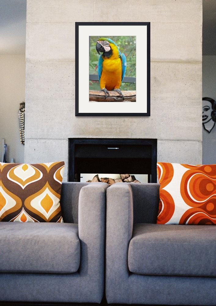"""""""Blue and Gold Macaw""""  (2008) by stockphotos"""