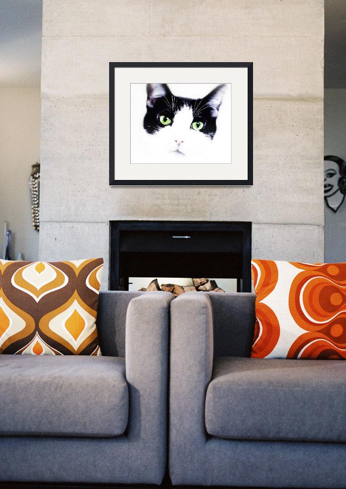 """""""Black and White Kitty&quot  (2011) by susanweingartner"""