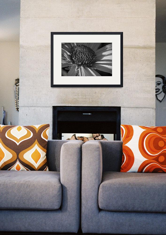 """""""coneflower black and white&quot  (2009) by poetryoflight"""
