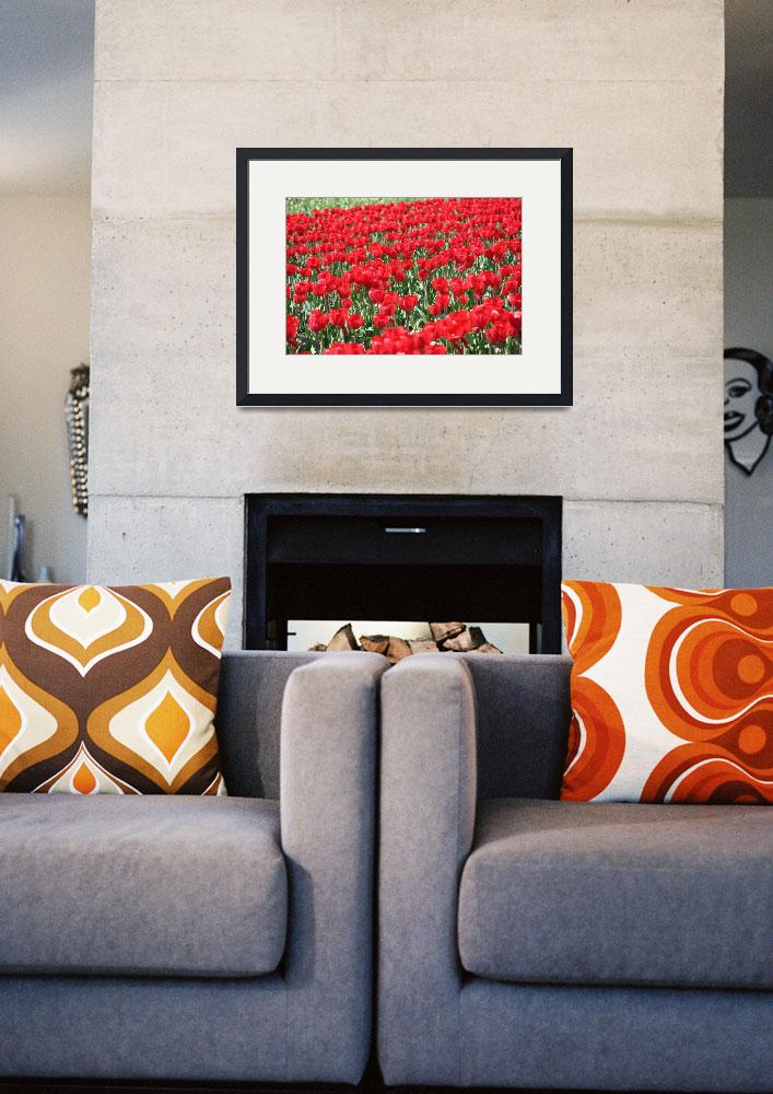 """""""Red tulips&quot  by hendryp"""