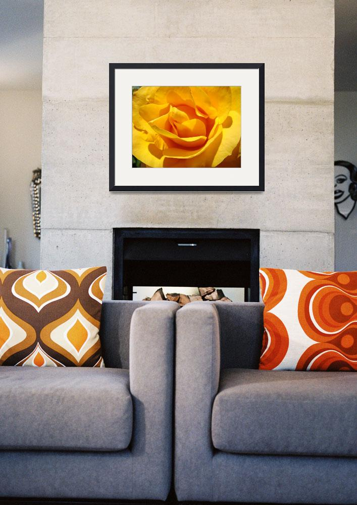 """Roses Golden Orange Yellow Rose Flower 1 Art Gifts&quot  (2009) by BasleeTroutman"