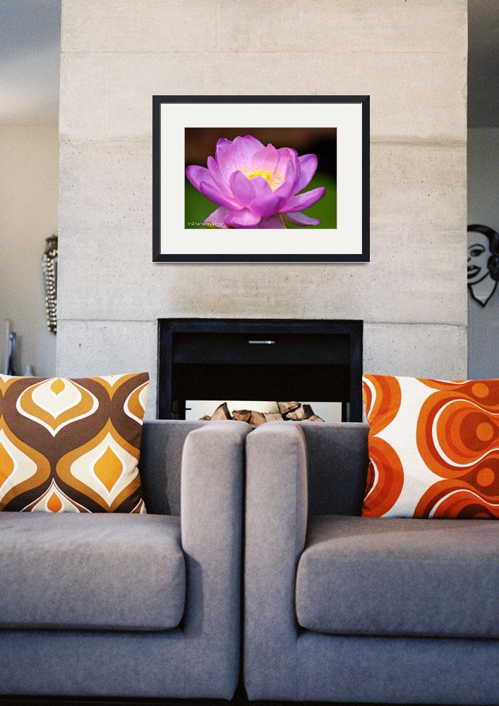 """""""Pink Waterlily&quot  (2015) by simonevanbergen"""