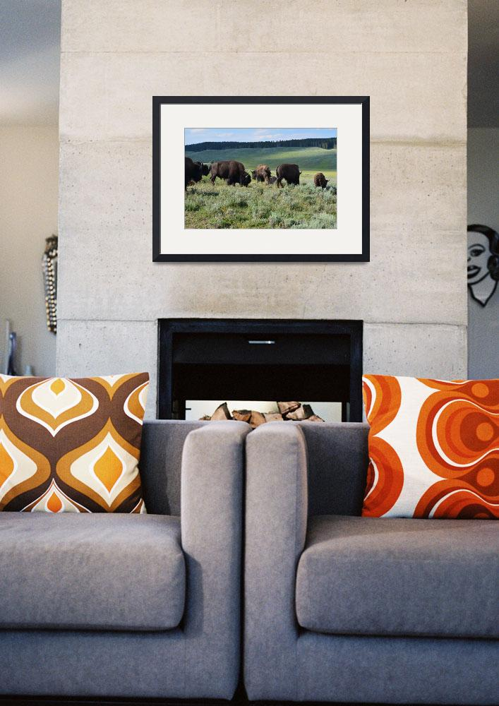 """""""Yellowstone park bison family standing eatting&quot  (2016) by truepixbymollygreene"""