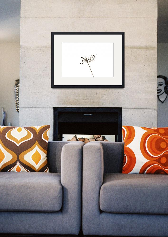 """Birds on antenna&quot  (2014) by bjamesphotography"