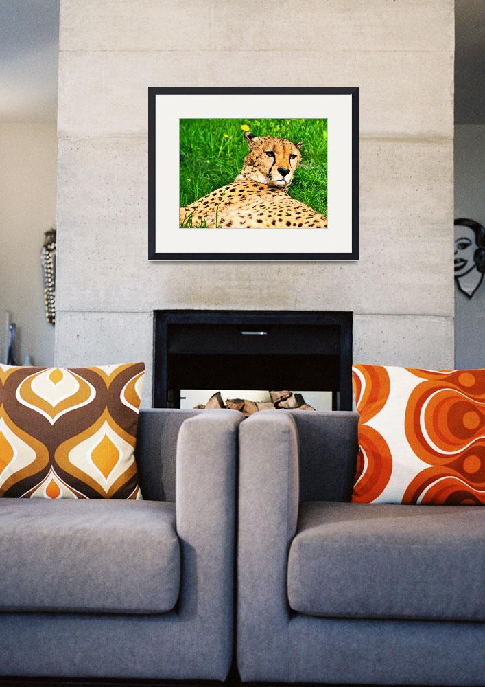 """""""Relaxed Cheetah&quot  (2013) by amira"""