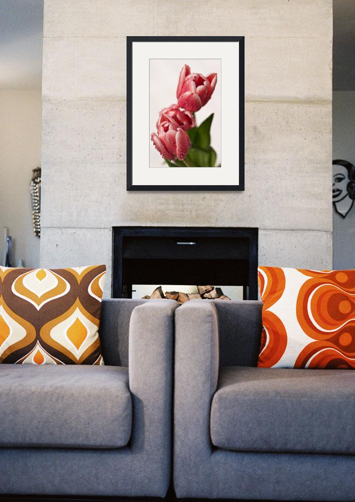 """Tulips""  (2011) by Lancsphotographer"