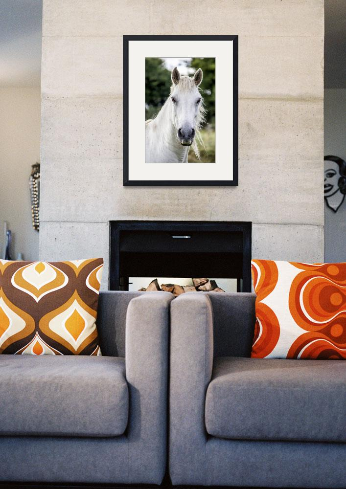 """""""White Horse Art Print""""  (2016) by rogueart"""