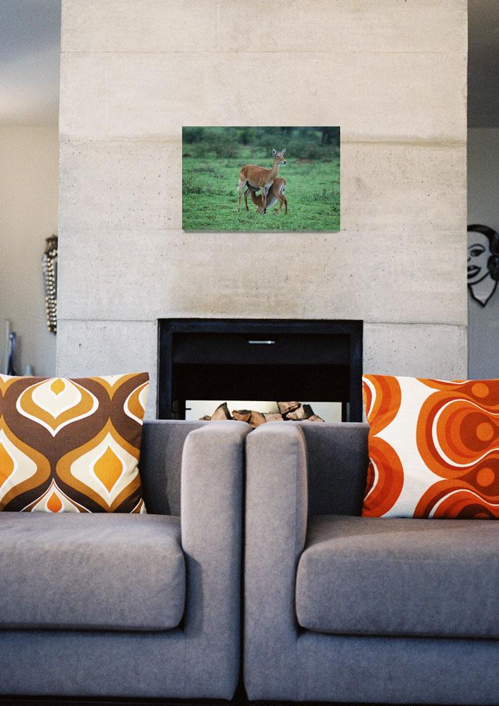 """Deer and Calf in Murchison Falls NP, Uganda""  by KTildesley"