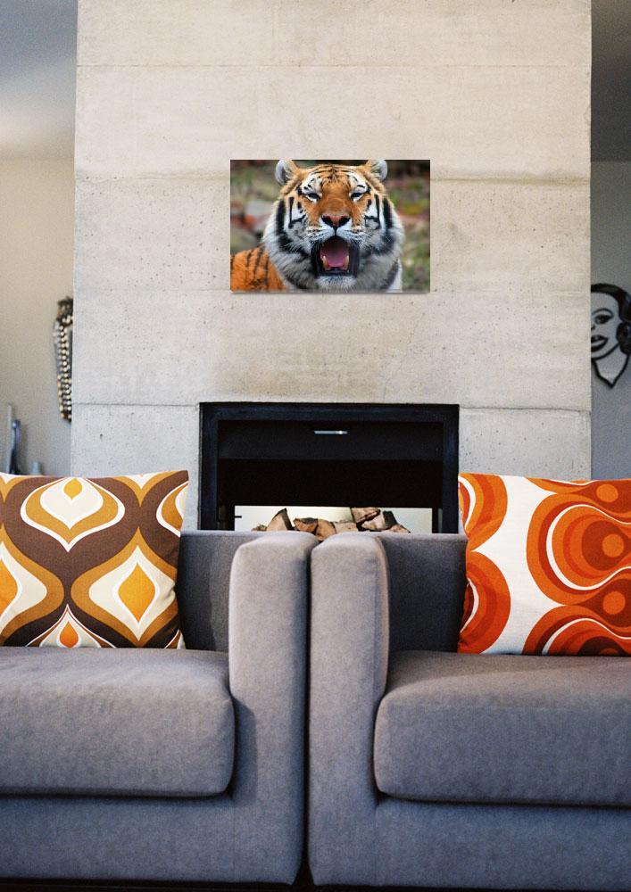 """""""Sumatran Tiger Potrait""""  (2008) by friend_cuttack"""