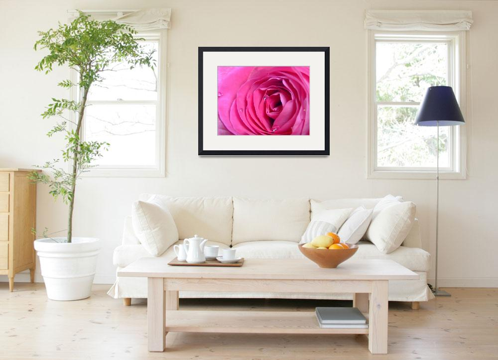 """""""Rose&quot  (2009) by Hartphotography"""