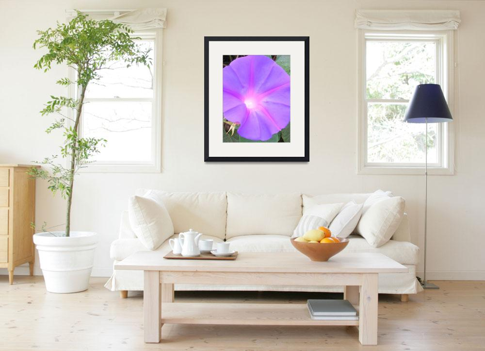 """""""Large Morning Glory&quot  (2006) by SeaAngel"""
