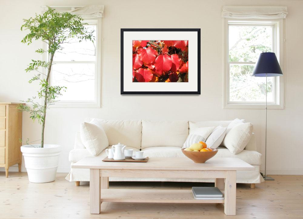 """""""Red Leaves 2&quot  (2008) by keithkphotos"""